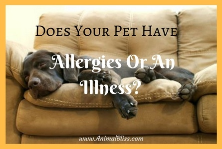 6 Tips to Tell Whether Your Pet Has Allergies or an Illness
