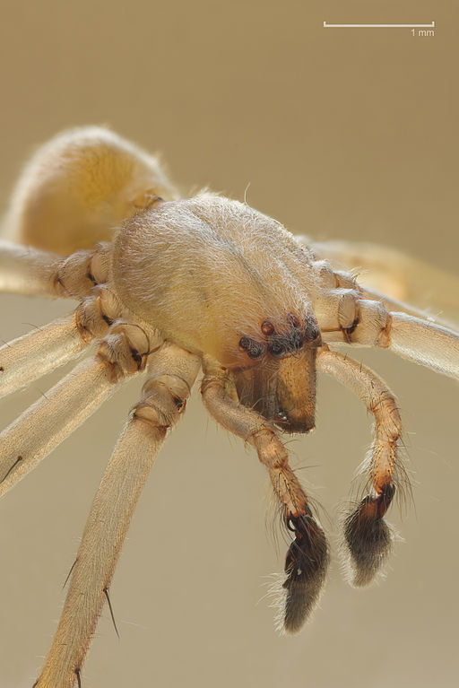 10 Most Dangerous Spiders to Stay Away From