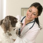 6 Rewarding Careers Every Animal Lover Should Consider