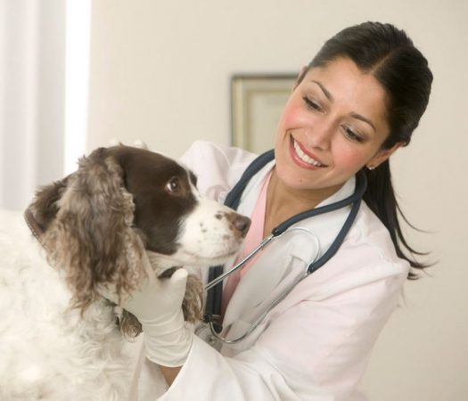 Six Rewarding Careers Every Animal Lover Should Consider