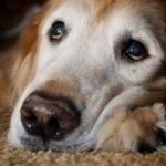 What You need to Know About Heartworms in Dogs