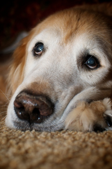 Natural Ways to Relieve Dogs from Joint Pain