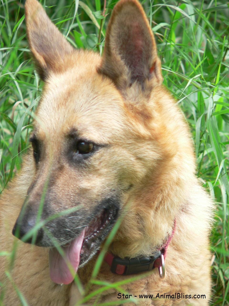 Canine Osteosarcoma : Bone Cancer in Dogs