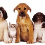 Cool Cats and Hot Dogs: Keeping Your Pet Safe All Year Long