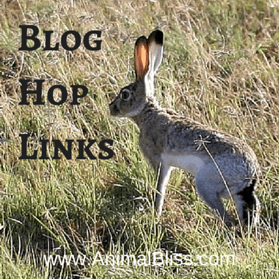 Blog Hop Links