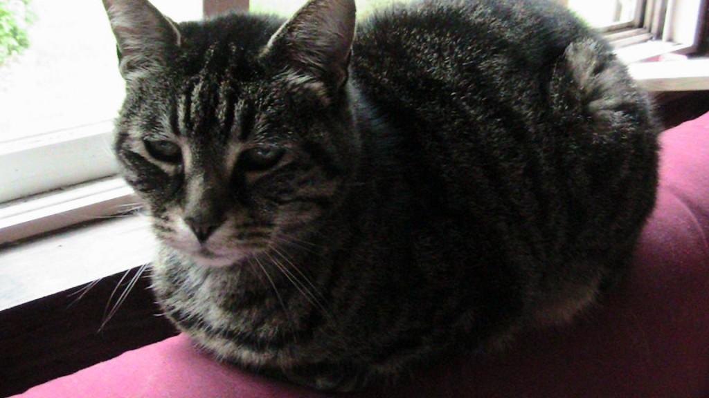 Jessie Cat Sunday Selfies Blog Hop