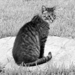 Black and White Sunday Blog Hop for Pets