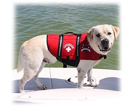 Best Dog Life Jacket Vest for Your Dog