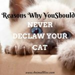 Reasons Why You Should NEVER Declaw Your Cat – Inhumane