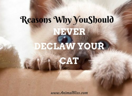 Reasons why you should NEVER declaw your cat.