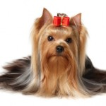 Shaving Your Pet for Summer? Maybe You Shouldn't