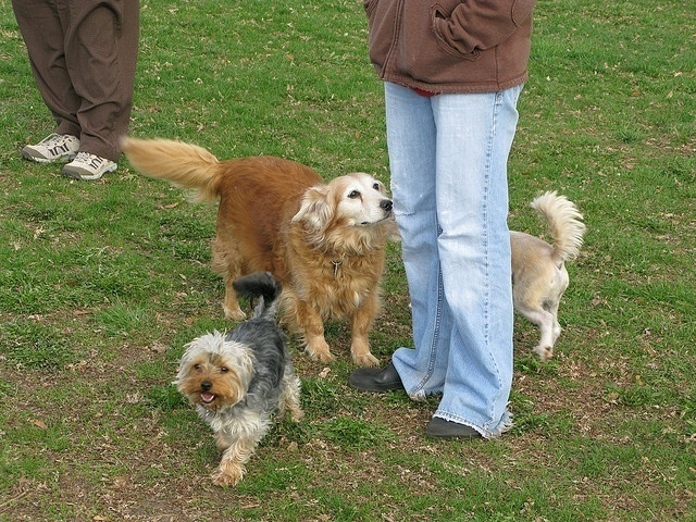 The Benefits of Socialization for Your Dog