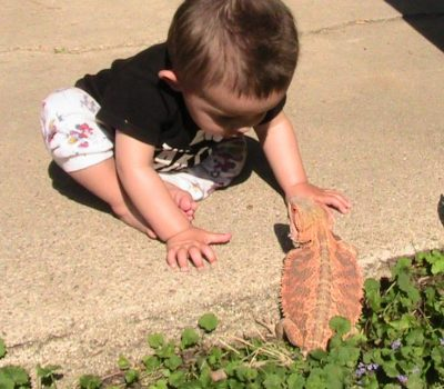A Boy and a Bearded Dragon, a Wordless Wednesday