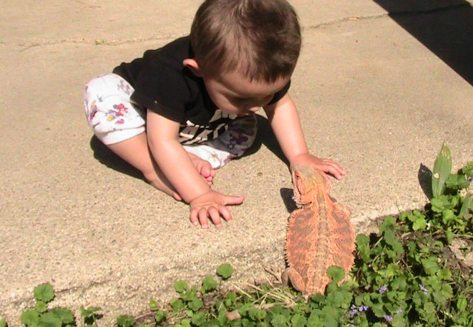 A Boy and a Bearded Dragon : a Wordless Wednesday Post