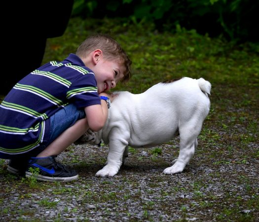 Why You Must Include the Kids in Your Dog Obedience Training