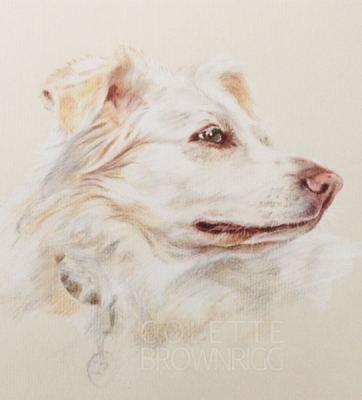 Pet Portrait Artist - Colette Brownrigg