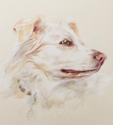 Pet Portrait Artist - Colette Brownrigg