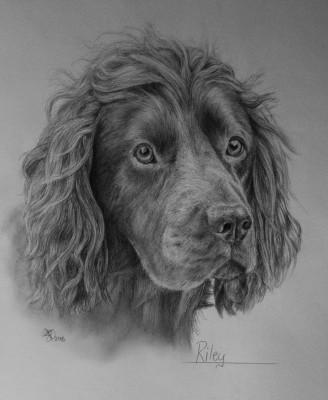 Pet portrait artist, Eilidh Geddes, Scotland