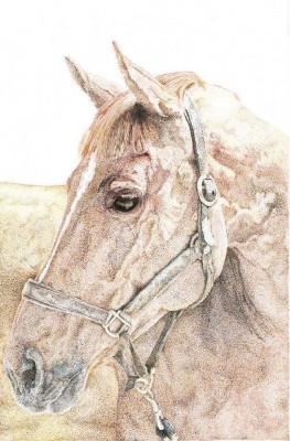 Pet Portrait Artist Jay Brockbank, England