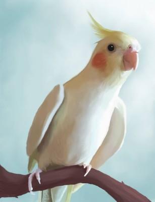 Jenna Whittaker, bird