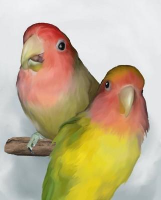 Jenna Whittaker, birds