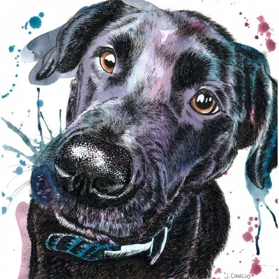 Pet Portrait Artist: Jessica Cancio Sylvania ♦ Ohio, USA