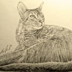 Kate Evans, Pet Portrait Artist