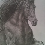 Kate Evans, Horse, Animal Portrait Artist