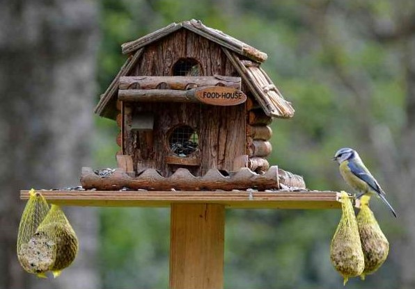 How To Attract Birds To Your Backyard how to attract birds to your backyard | animal bliss