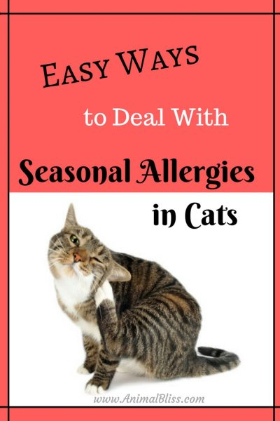 Easy Ways to Deal with Seasonal Allergies in Cats