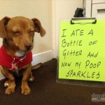 4 Tips for Successful Puppy Potty Training