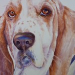 Featuring Animal Portrait Artist : Sheri Hoeger, California