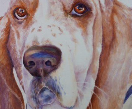 Featuring Animal Portrait Artist : Sheri Hoeger, California