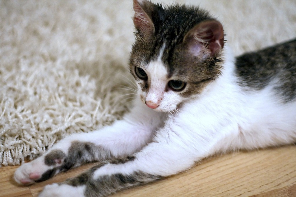 Carpet Cleaning For Pet Owners : 4 Tips and Remindes