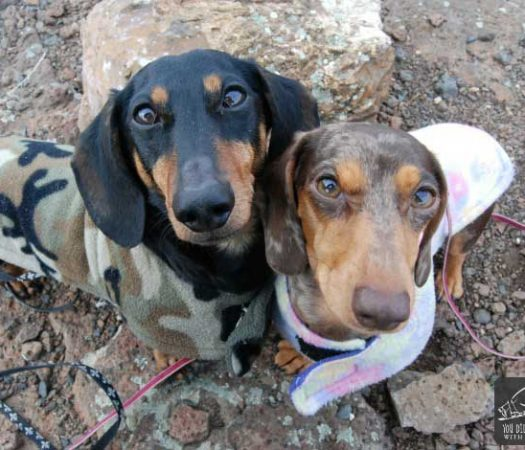 The truth about dachshunds, aka weiner dogs