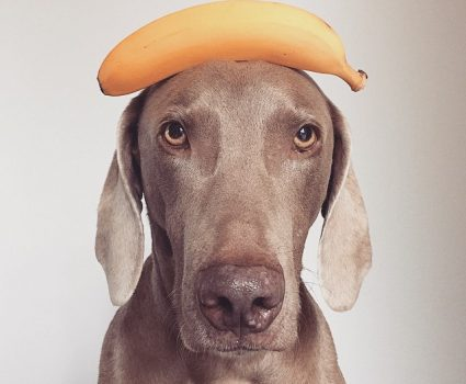 Should You Feed Your Dogs Bananas?