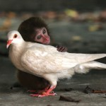 More Unlikely Animal Friendships