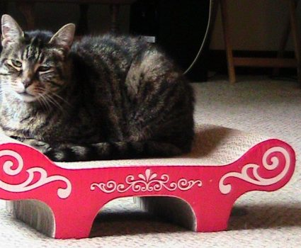 Catit Bench Scratcher with Catnip Review
