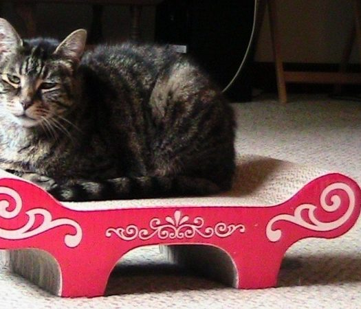 Catit Bench Scratcher Review