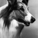 The Story of Lassie : Iconic Collie Dog