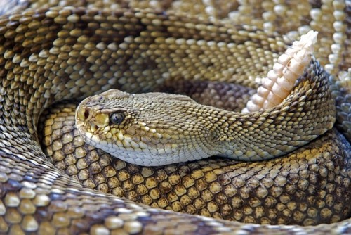 Snake Recognition: Harmless Snakes vs Dangerous Snakes