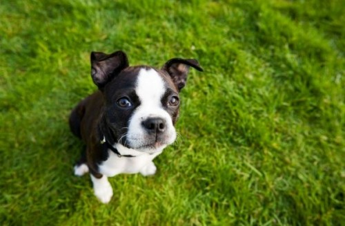 Summer Pet Care: Make Changes to Keep Your Pet Safe