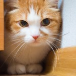 How to Recognize Stress and Anxiety in Cats