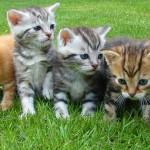 Summer Pet Care: Make Changes to Keep Your Pet Safe