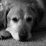 Just Jake : Black and White Sunday Blog Hop