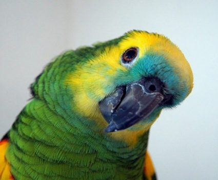 How to Care for Your Pet Parrot in Winter