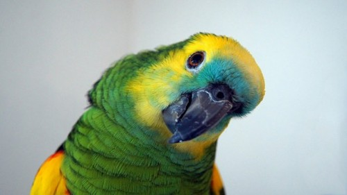 how to care for your pet parrot in winter animal bliss