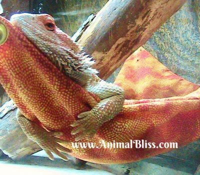 Dragon at Rest : Wordless Wednesday with Shirley