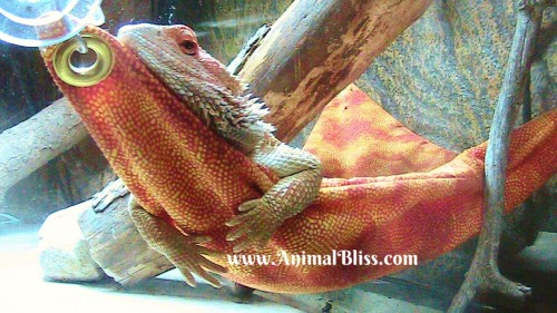 Dragons Need Sleep Too : Wordless Wednesday with Shirley, Blog Hop