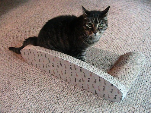 Got Shredded Couch? Get Kitty Couch Scratcher